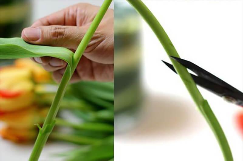 cách chưng hoa lâu dịp tết